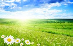 Nature Background Hd Background Wallpaper 26