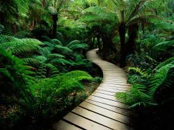 ... Nature Backgrounds-4 ...