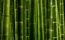 2560x1600 Nature Bamboo wallpaper