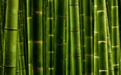 2560x1600 Nature Bamboo wallpaper