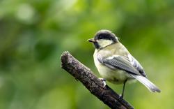 Branch Bird Nature HD Wallpaper