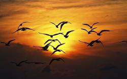 Nature Birds Silhouette Sunset Wings Fly Sky