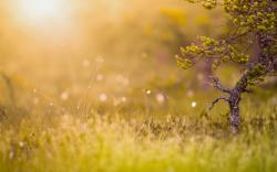 Tree Grass Nature Bokeh HD Wallpaper