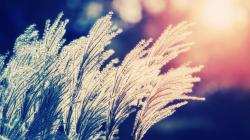 Nature bokeh sunlight depth of field reeds wallpaper