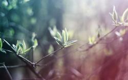 Nature Branch Light