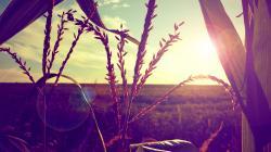 Nature field sunset