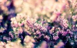 Flowers Nature Bokeh