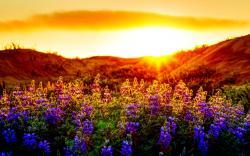 Sunset Flowers Nature