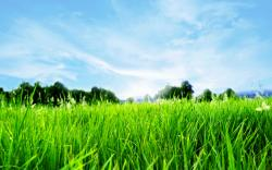 Grass Full Hd Nature Green Blue Grass Desktop Background