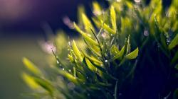 Cool Nature Macro Wallpaper; Free Nature Macro Wallpaper ...