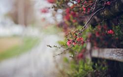 Flowers Macro Nature