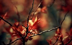 ... Nature Macro Wallpaper ...