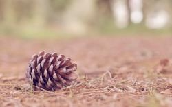 Nature Pine Cone