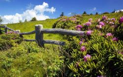 summer sky green meadow fence flowers clouds landscapes hills plants wallpaper background