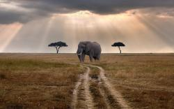 Nature Road Trees Elephant Wildlife