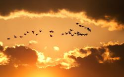 Nature Sky Birds Flying