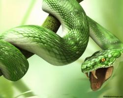 Green Nature Snake