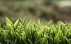 Grass Close-Up Nature HD Wallpaper