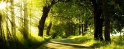 Green Nature Dual Monitor