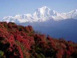Nepal Experience Tours