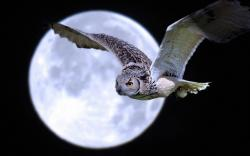 Night Owl Moon Wallpapers Pictures Photos Images. «