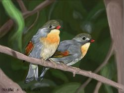Nightingale of Japan