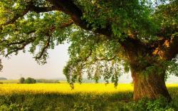Abraham's Oaks: Portal to the Divine