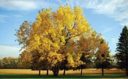 http://khongthe.com/wallpapers/nature/yellow-oak-tree-65423.jpg