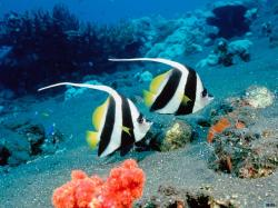 ocean life wallpapers 32
