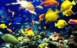 Ocean Life 30950 1600x1200 px