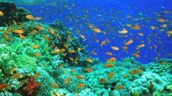 Ocean Life Wallpapers 30949 1600x1000 px