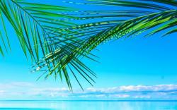 Ocean Palm Leaves