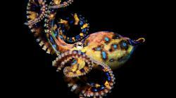 ... Octopus · Octopus · Octopus · Octopus