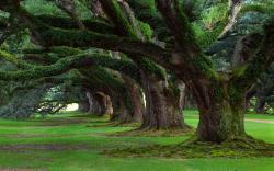 Old tree moss Wallpapers Pictures Photos Images. «