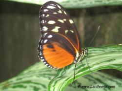 JPG · 16-Orange-Black-Butterfly.