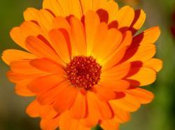 Cool Orange Flower