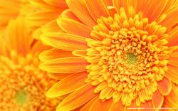 Flowers And Plants Orange Flower Background