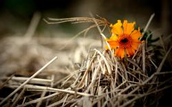 Orange flower hay