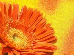 Beautiful Orange Flower Wallpaper · Orange Flower · Orange Flower ...