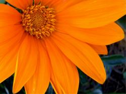 Orange Flowers Photos Widescreen 2 HD Wallpapers