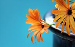 Orange flowers background