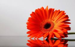 ... Orange Flowers Wallpapers. These desktop wallpapers are high definition and available in wide range of sizes and resolutions.