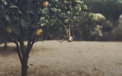 Orange Grove Bell Nature Mood