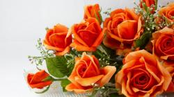 View And Download Orange Roses Wallpapers ...