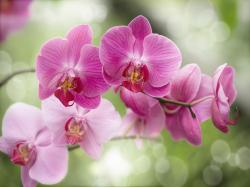 Purple Orchids Wallpaper Viewing Gallery