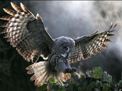Owl Wallpaper 37 Bird Photos