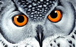 ... orangeeyes-owl-wallpaper owl_desktop_wallpaper ...