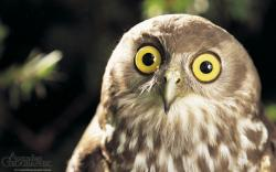 Owl Medicine