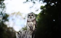 Owl Bird Bokeh