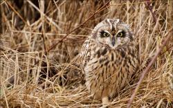 Owl Bird Grass